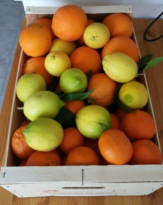 Our host gave us this fruit from her farm.